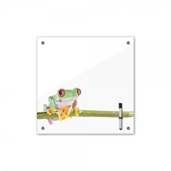 Memoboard - Tiere - Rotaugenlaubfrosch - 40x40 cm