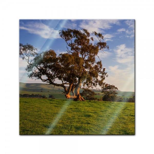 Glasbild - Clare Field - Australien