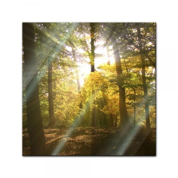 Glasbild - Waldlichtung
