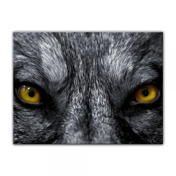 Leinwandbild - Wolfsaugen