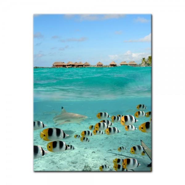 Leinwandbild - Hai und Fische in Bora Bora - Französisch-Polynesien
