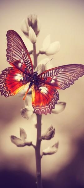 Türtapete selbstklebend Schmetterling auf einem Feld Vintage 90 x 200 cm Falter Insekt bunt Flügel