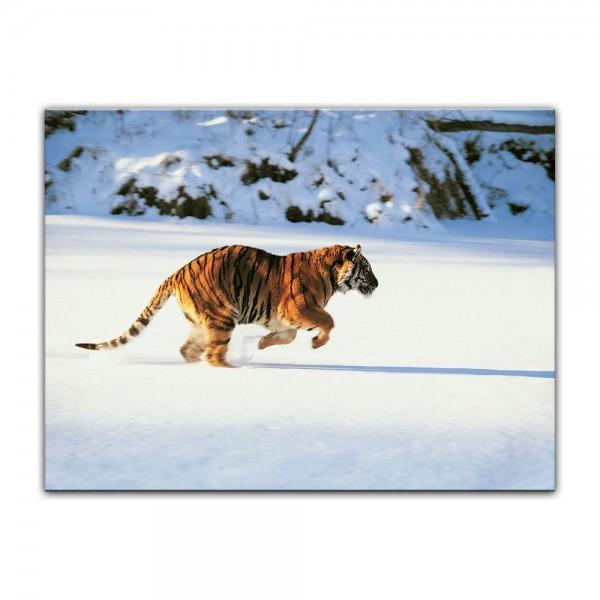 Leinwandbild - Tiger