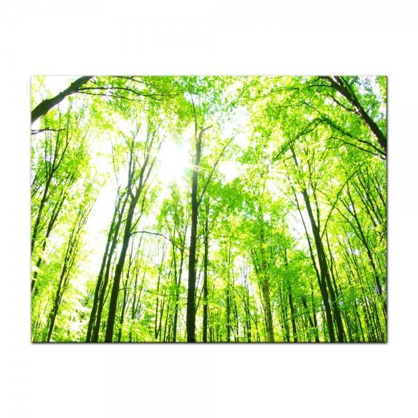 Leinwandbild - Grüner Wald