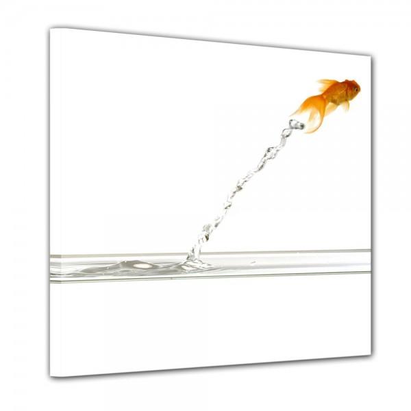 SALE Leinwandbild - springender Goldfisch - 60x60 cm