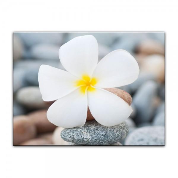 Leinwandbild - Weiße Blüte auf Steinen