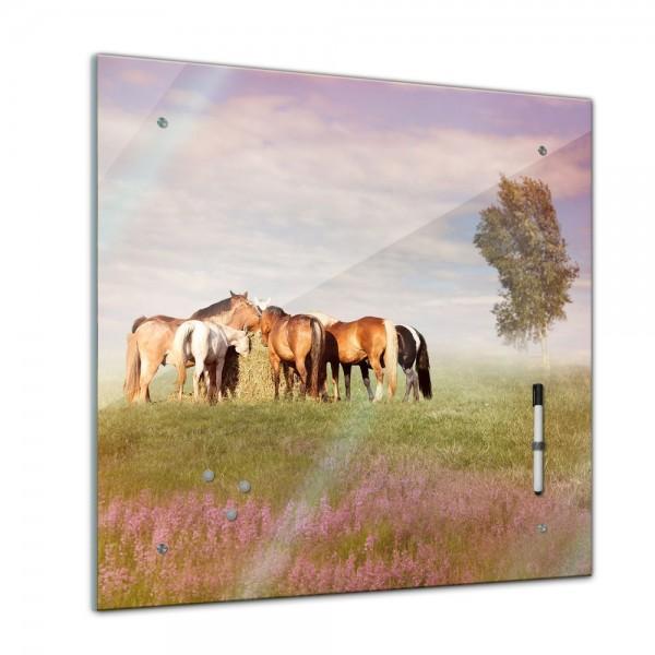 Memoboard - Tiere - Pferde auf der Weide - 40x40 cm