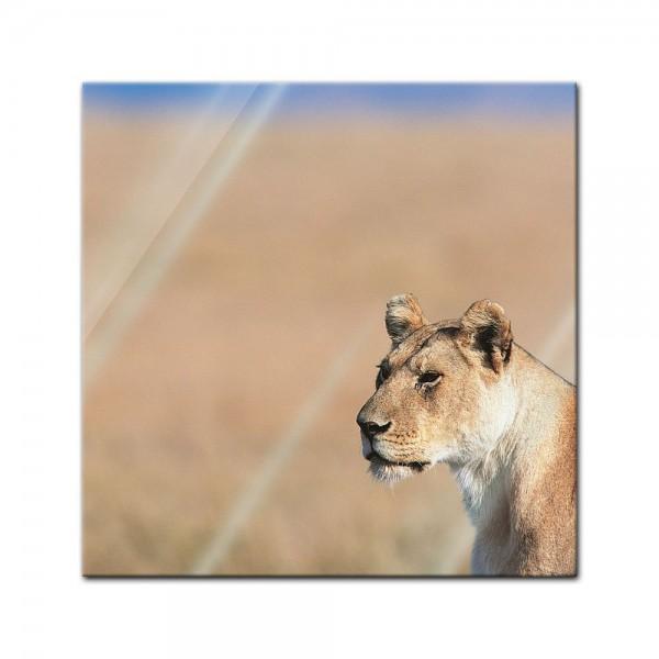 Glasbild - Löwin