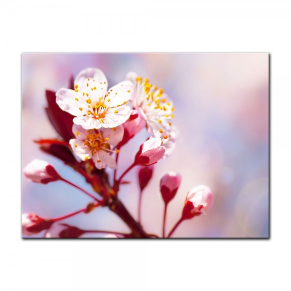 Leinwandbild - Apfelblüten