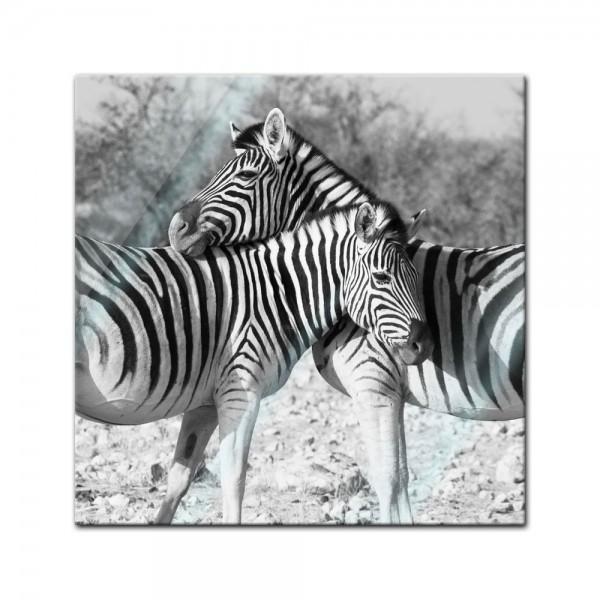 Glasbild - Zebrapaar