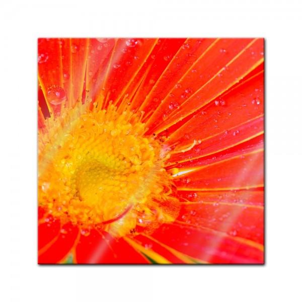 Glasbild - orangefarbige Gerbera