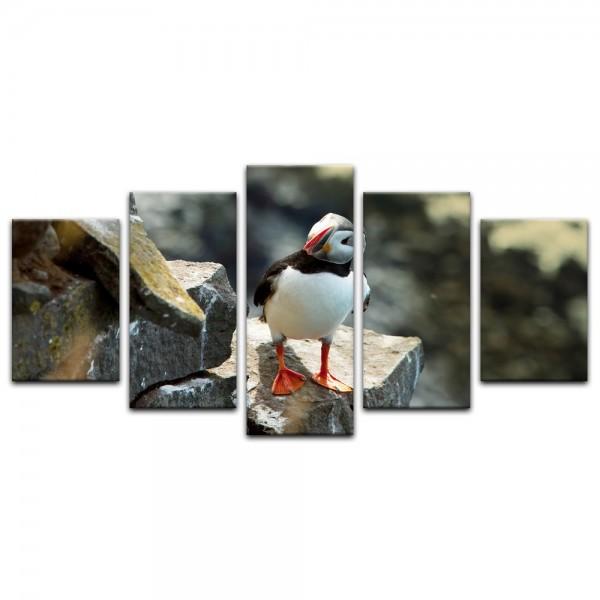 Leinwandbild - Papageientaucher auf Felsen