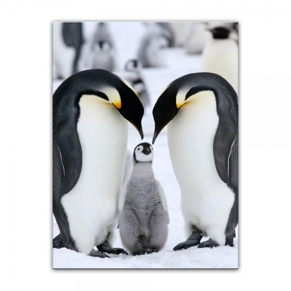 Leinwandbild - Pinguinfamilie