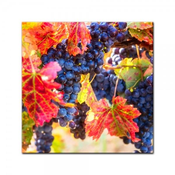 Leinwandbild - Weinrebe