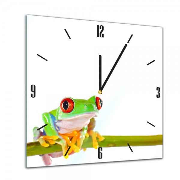 Glasuhr - Tiere - Rotaugenlaubfrosch - 40x40cm