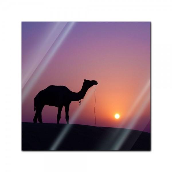 Glasbild - Kamel im Sonnenuntergang