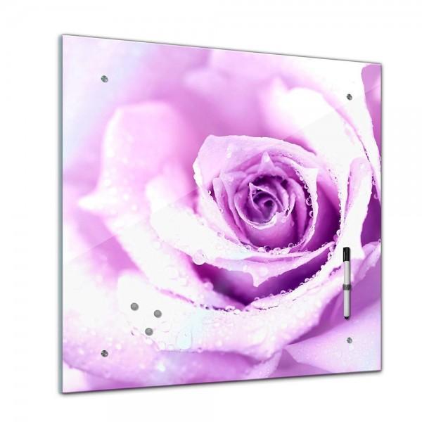 Memoboard - Pflanzen & Blumen - lila Rose mit Wassertropfen - 40x40 cm