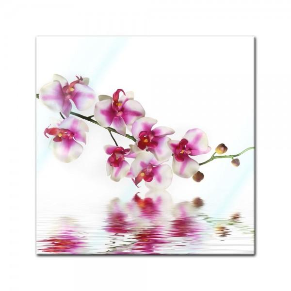 Glasbild - Orchideenzweig