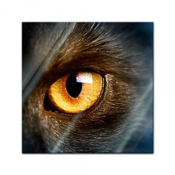 Glasbild - Katzenauge