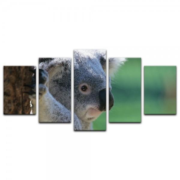 Leinwandbild - Koalabär II