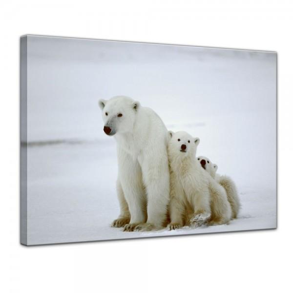 SALE Leinwandbild - Eisbärin mit Jungen II - 60x50 cm