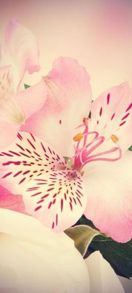 Türtapete selbstklebend Inkalilie Vintage 90 x 200 cm Blume Blüte Zierpflanze Pflanze Blatt Natur L