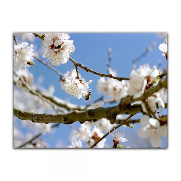 Leinwandbild - Frühling