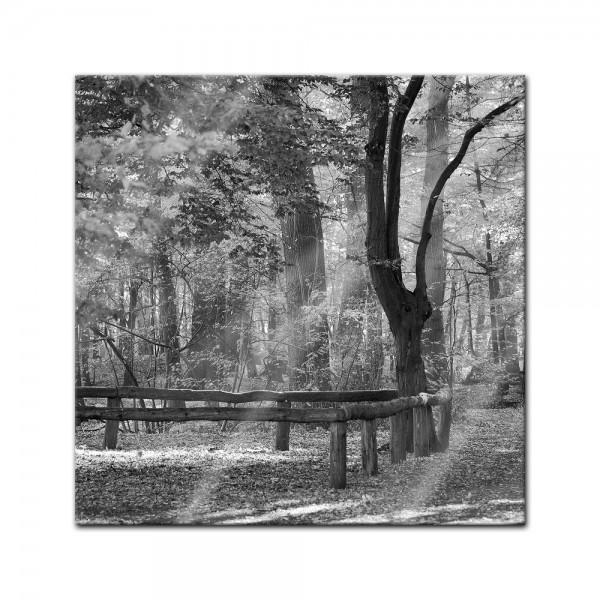 Glasbild - Wald - sw