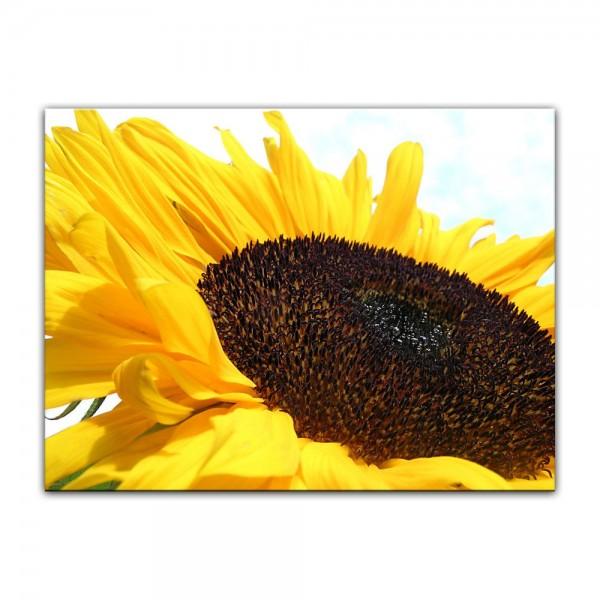 Leinwandbild - Sonnenblume
