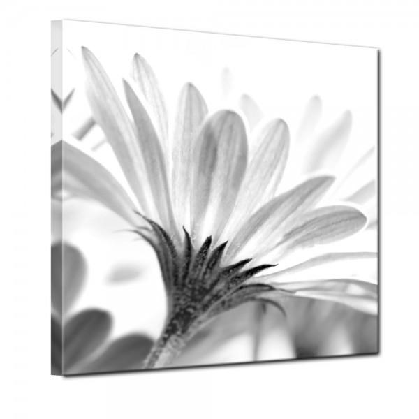 SALE Leinwandbild - Blume schwarz weiss - 40x40 cm