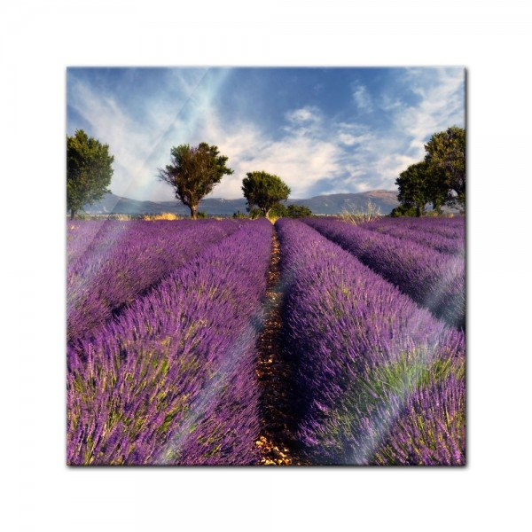 Glasbild - Lavendelfeld in der Provence - Frankreich