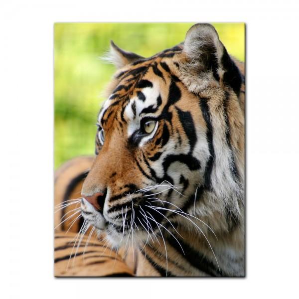 Leinwandbild - Sumatra Tiger