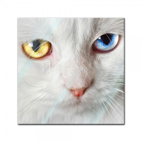 Glasbild - weisse Katze mit zwei Augenfarben