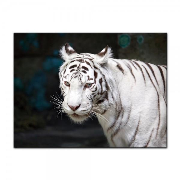 Leinwandbild - Weißer Tiger