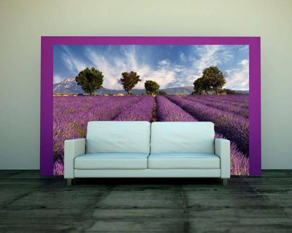 Fototapete - Lavendelfeld Provence - Frankreich