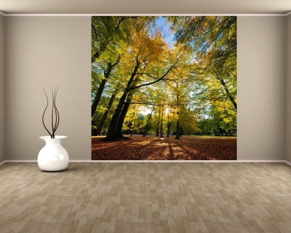 Fototapete Blätterfall im Herbst