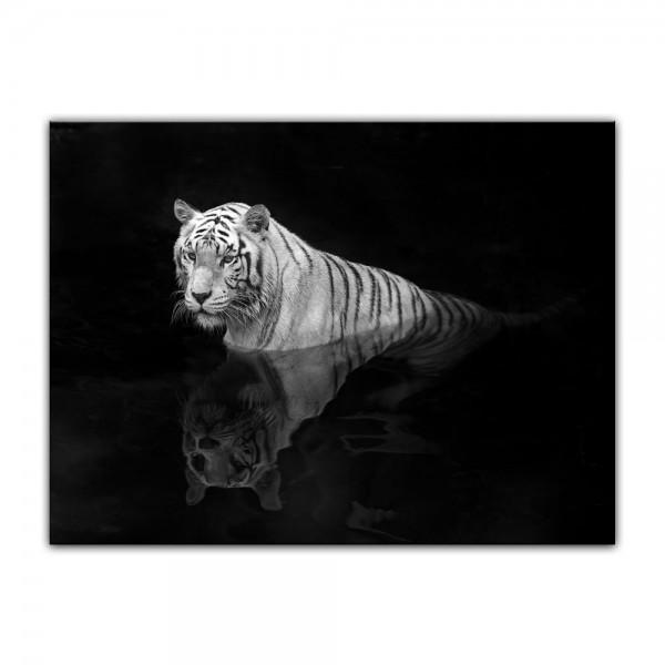 Leinwandbild - Tiger im Wasser