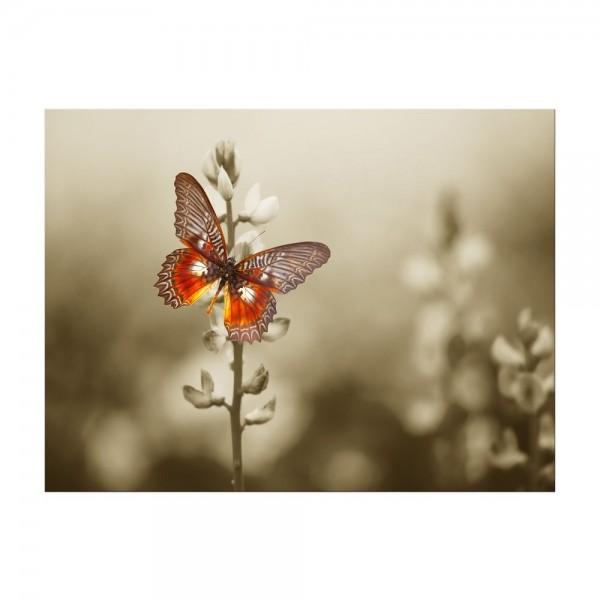 Leinwandbild - Roter Schmetterling auf düsterem Feld