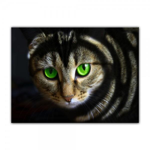 Leinwandbild - Katze mit grünen Augen