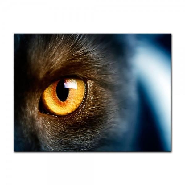 Leinwandbild - Katzenauge