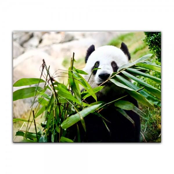 Leinwandbild - Pandabär