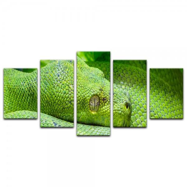 Leinwandbild - grüne Python