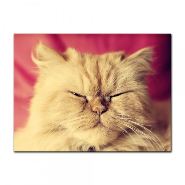 Leinwandbild - niedliche Katze