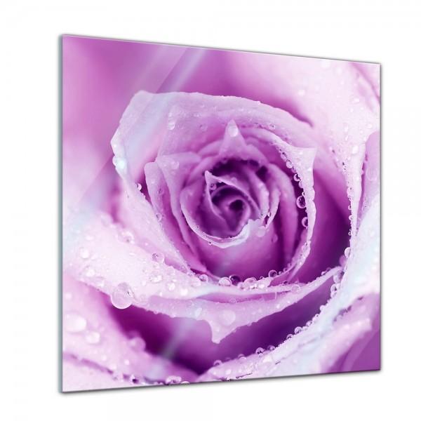 Glasbild - Lila Rosa - 30x30 cm