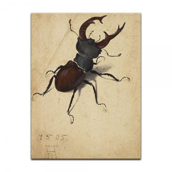 Leinwandbild - Albrecht Dürer - Aquarell - Hirschkäfer