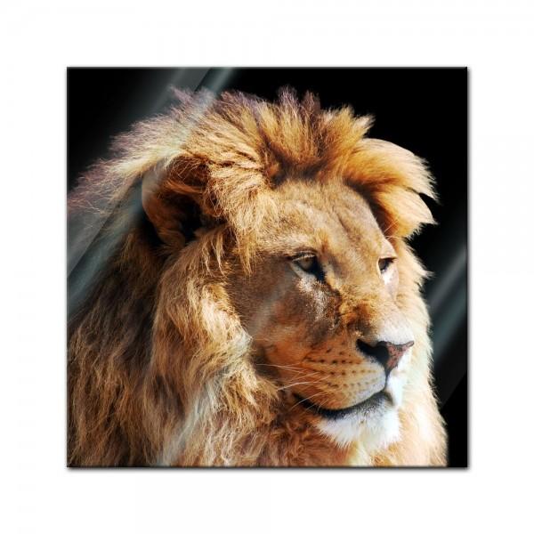 Glasbild - Löwenkopf