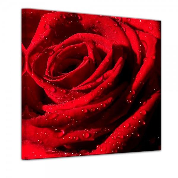 SALE Leinwandbild - Rote Rose mit Wassertropfen - 60x60 cm
