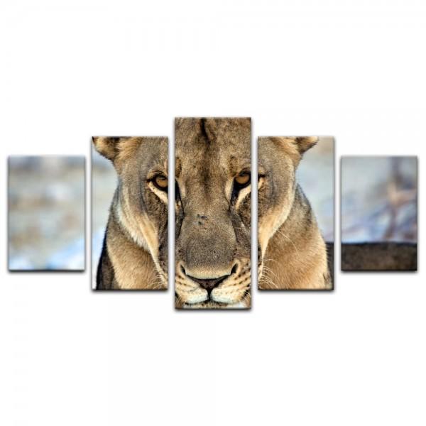 Leinwandbild - Löwin - Portrait