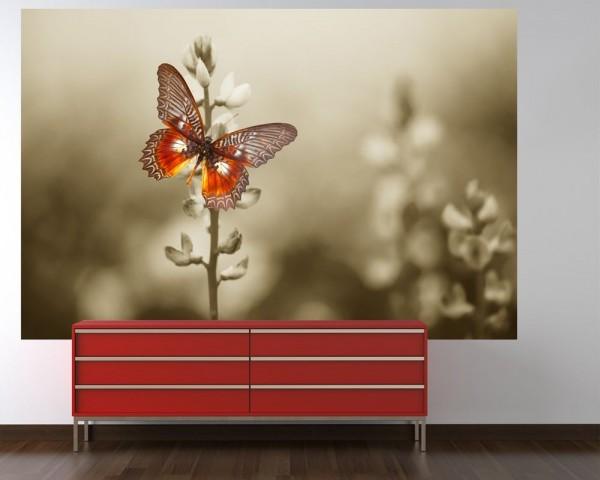 Fototapete Roter Schmetterling auf düsterem Feld
