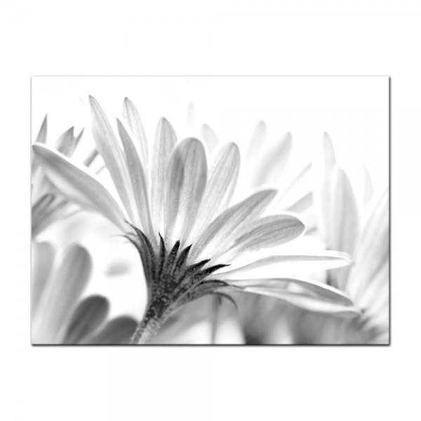 Leinwandbild - Blume - schwarz weiss